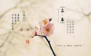 二十四节气之立春花朵植物高清电脑壁纸