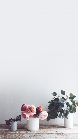 小清新唯美花卉图片桌面壁纸