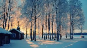 冬日暖阳雪景风景高清桌面壁纸