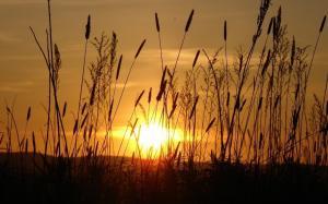 芦苇丛中升起的太阳,温暖阳光普照大地
