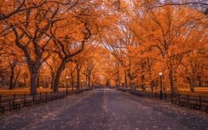 十分震撼的秋季风光