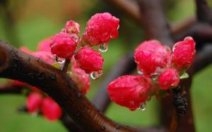 立夏节气时的鲜花