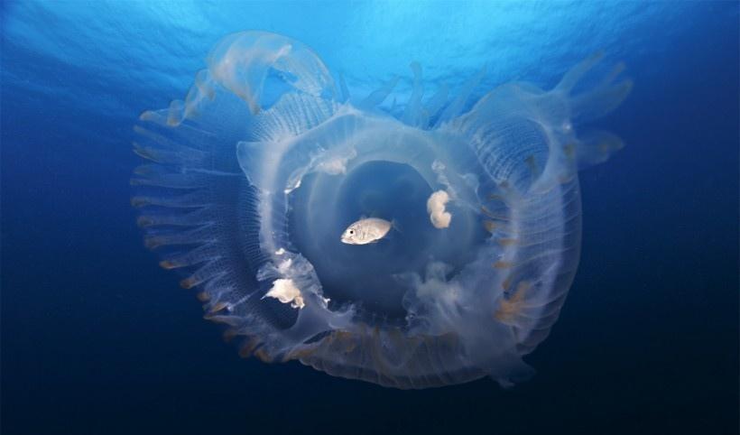 漂亮的深海荧光水母图片