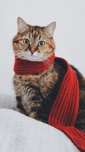 围着红色围巾的可爱虎斑猫手机壁纸