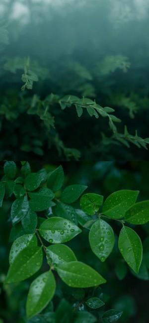 清新唯美绿色养眼植物图片壁纸