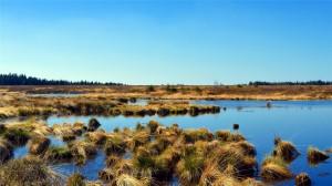 美丽的沼泽湿地唯美高清桌面壁纸