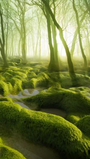 童话般的树林迷人风光
