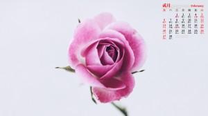 2022年2月粉色玫瑰唯美日历壁纸图片