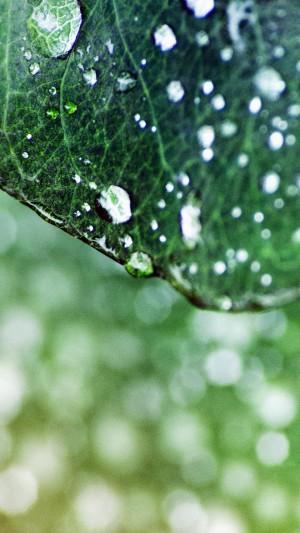 清晨的露珠落在绿叶上
