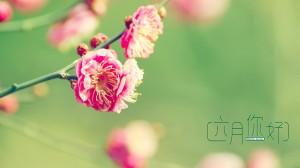 六月的唯美花朵