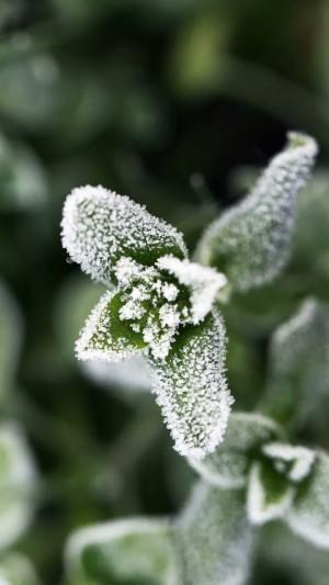 霜降之结霜的小花