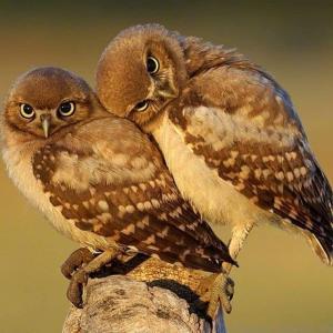 两只小鸟如情人般甜蜜相偎相依