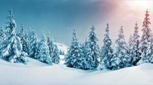 冬天银色的森林
