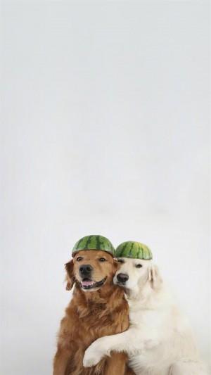 萌系汪星人狗狗可爱高清手机壁纸