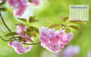 2021年4月小清新樱花唯美日历壁纸