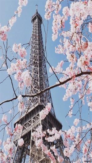 清新唯美樱花高清手机壁纸