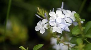 唯美养眼清新花卉图片