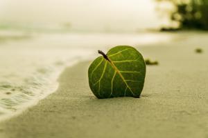 海边沙滩一片叶子图片唯美