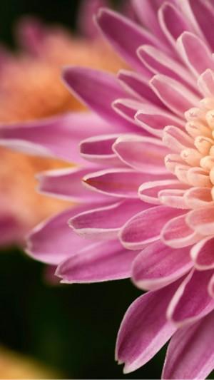 微距花朵唯美摄影手机壁纸