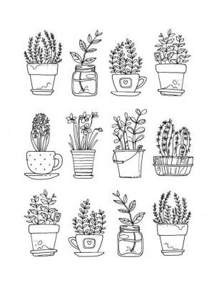 简约手绘线条植物手账图片