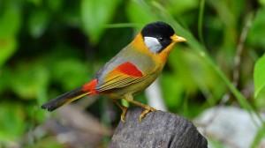 艳丽小鸟高清桌面壁纸
