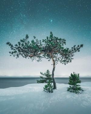 树木的宁静之美