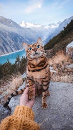 萌宠虎纹可爱大眼小猫咪手机壁纸