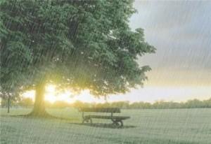 雨季唯美景色桌面壁纸