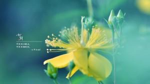 7月加油绿色清新植物壁纸图片
