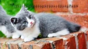 2020年11月憨态可掬的萌系猫咪日历壁纸