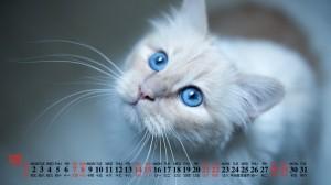 2019年12月可爱温顺的白色猫咪日历壁纸