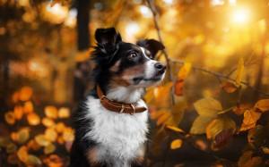 唯美可爱动物摄影图片壁纸