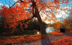 享受秋天的无限风光
