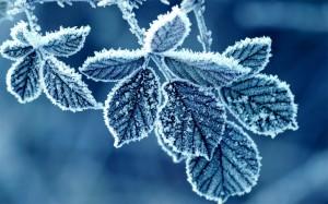二十四节气之霜降大自然风景桌面壁纸
