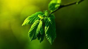 立夏节气植物