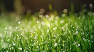 小清新养眼的小草上的露珠