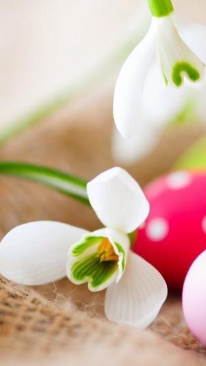 雪花莲上的复活节彩蛋