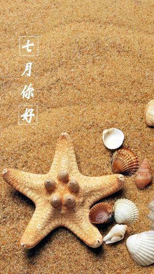 阳光沙滩海星贝壳七月你好的图片