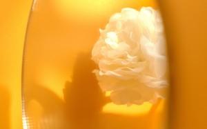盛夏金色阳光唯美风景桌面壁纸