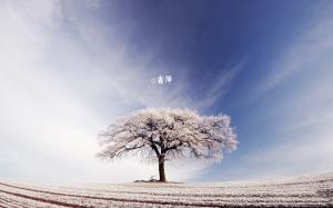 二十四节气之霜降季节无限风光风景高清桌面壁纸