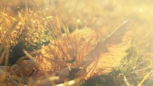 温暖阳光下唯美的落叶