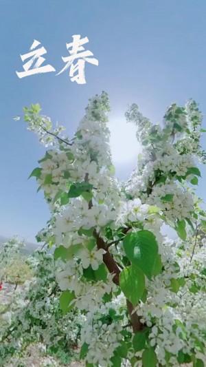 传统节气之立春