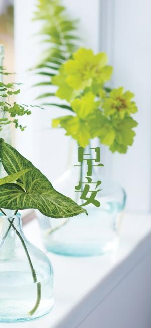 早安你好之绿色的盆栽图片