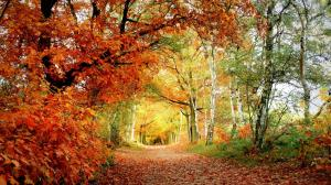 秋天树叶片片飘落桌面壁纸