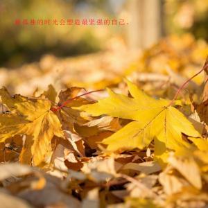 秋叶之孤独无人懂的伤感句子