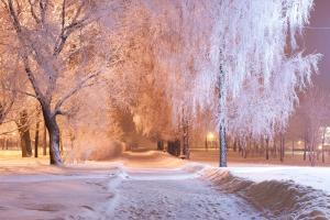 公園,雪,冬天,樹木,燈光,晚上,小巷,風景攝影圖片