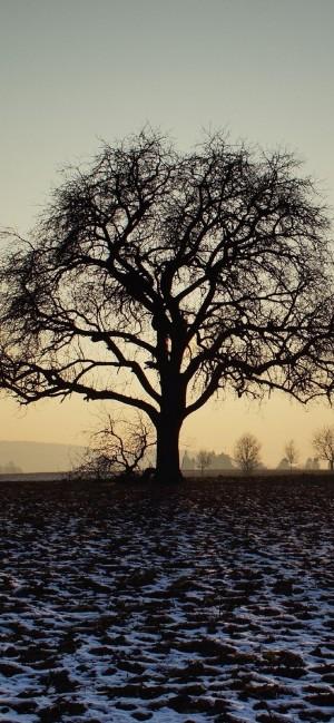 大自然唯美风景高清手机壁纸