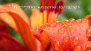 2020年11月唯美迷人花卉日历壁纸