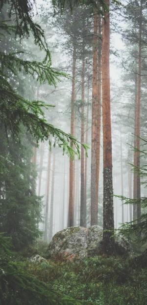 唯美的森林仙气治愈风光