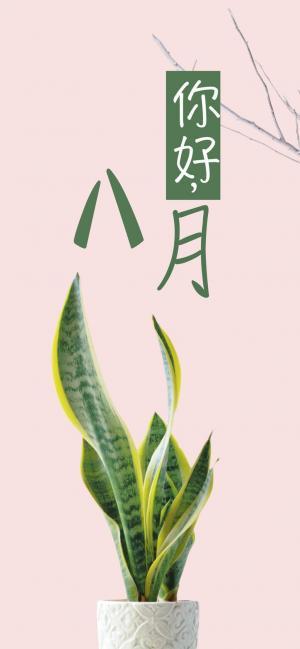 八月你好绿色护眼植物小盆栽图片
